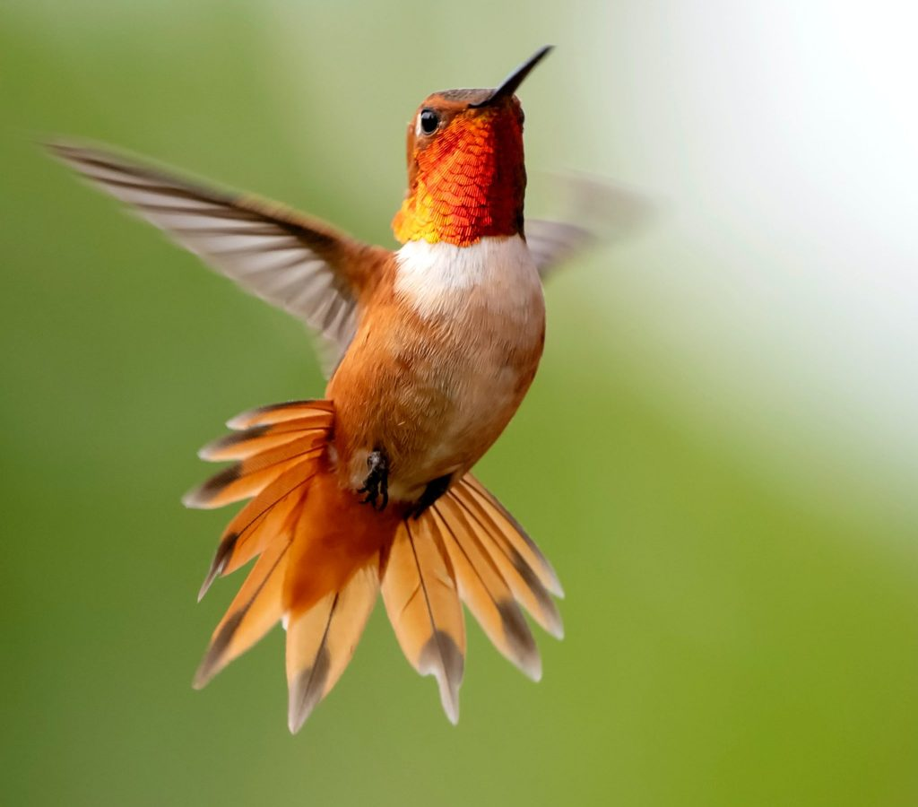 Oiseau libre